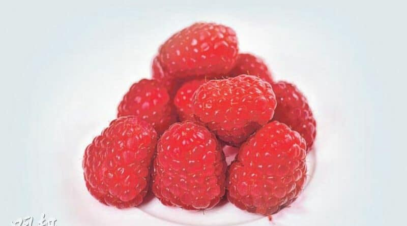 【營養要識】素得Smart:雙莓蒟蒻沙冰 消暑抗氧化