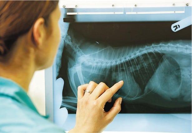 伊人醫事:動物的病理科醫生