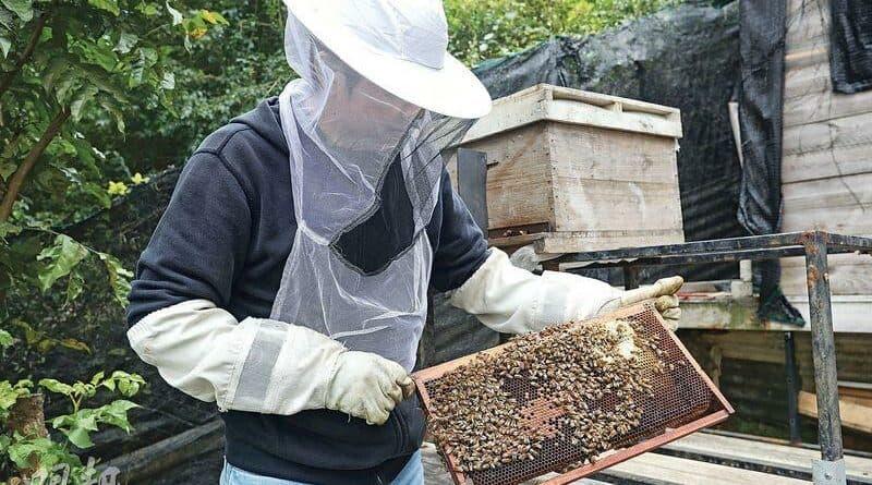 【中醫治療】浸、釀、漬 變化萬千 蜂蜜百味點止甜