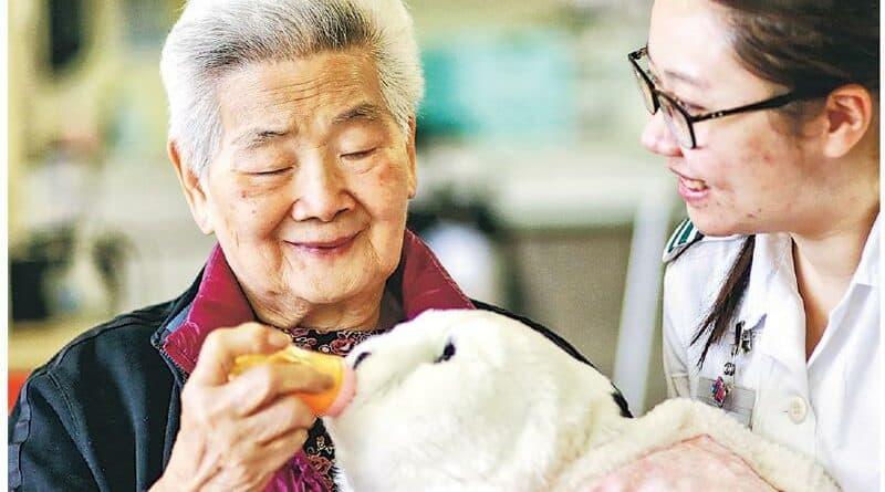 【認知障礙症】AI海豹助練自理 認障長者現歡顏 沙田醫院引入5年證有效 治療師盼多購