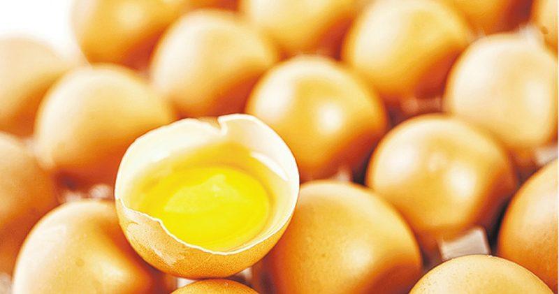 雞蛋,蛋白質,特效雞蛋,膽固醇