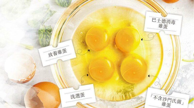 雞蛋,揀蛋,沙門氏菌,太陽蛋,巴士德消毒,嘉道理農場,香港高等教育科技學院,THEi