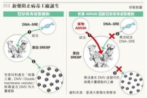 病毒工廠,新藥,袁國勇,SARS,MERS,HINI,H7N9,EV-71,寨卡,第五型腺病毒,流感,中東呼吸綜合症,腸病毒,傳染病,AM580,
