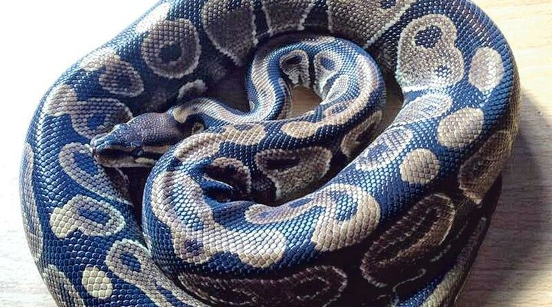 醫學滿東華:惡「蛇」纏身一圈