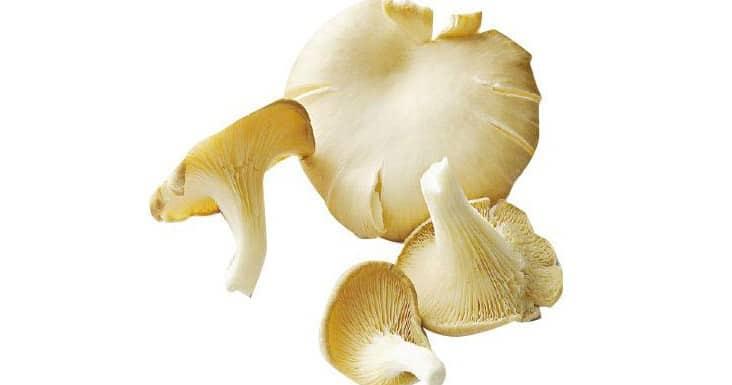 【中醫治療】中西合璧例子:蠔菇或減化療毒性