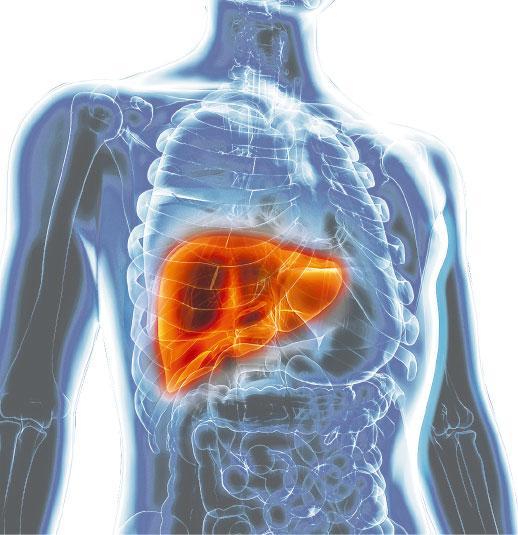 肝癌,免疫系統,標靶治療,癌症,免疫療法