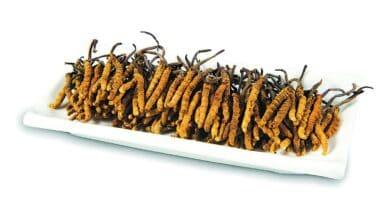 【抗疫你要知】提升免疫力 滋補強身 由冬蟲夏草開始