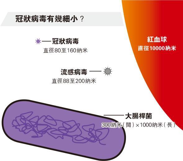 【抗疫你要知】冠狀病毒大解構 黐宿主受體入侵