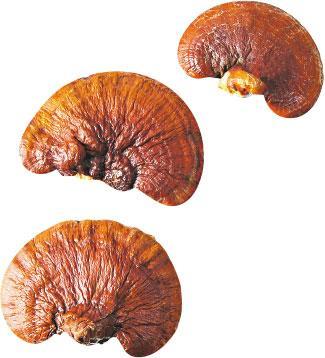 菇菌不毒 低卡高纖助減磅 痛風慎吃秀珍菇、乾冬菇